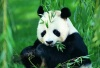 熊猫基地、三星堆一日游