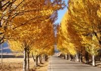 秋季—稻城亚丁最美的风景