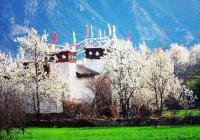 金川梨花、丹巴藏寨、品质纯玩三日游
